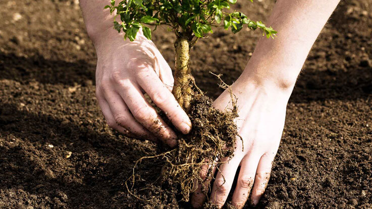 Young Planting
